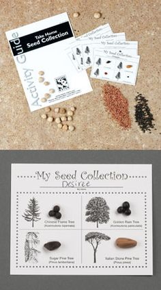 Seeds are amazing! A 100-foot tall tree grows from a tiny seed. Learn about seeds in this hands-on exploration. Compare and contrast...learn about germination...try some seedy experiments! A remarkable value that offers kid-created fun and learning.   Ages 6 and up.   Unit Goals and Concepts:        Present details and important information about seeds, including facts about what seeds can be used for.     Share the different methods of distribution for seeds.     Compare and ...