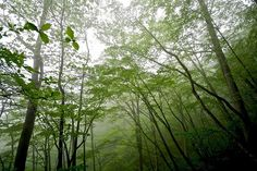 green Green by tez-guitar, via Flickr