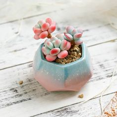 Small Ceramic Succulent Planter with Succulent Pot / Table Decor / Indoor Decor / Tabletop Planter / Minimalism / Animal Succulent Pots, Cacti And Succulents, Planting Succulents, Garden Plants, House Plants, Planting Flowers, Mini Plants, Indoor Plants, Plant Delivery