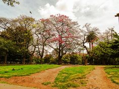 FOTOS SIN PORQUE: Fotografiando la naturaleza.  árboles, Cityscape, fotografías, fotos, imágenes urbanas, paisaje urbano de Buenos Aires, palomas, Photography, photos, street photography, urban landscape