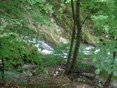 Lilllafüred - patak Trunks, Plants, Drift Wood, Tree Trunks, Plant, Planets
