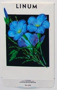 Recent Stock Seed Packet, Linum, #846