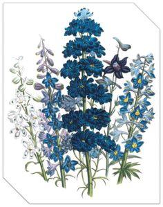 Botanic Flowers