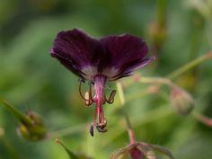 Bloemen foto's | Vlasserij-tuin.jouwweb.nl