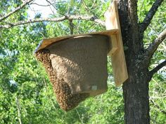"Here are a couple of swarm traps I've ""caught"" swarms in in my own yard. By Erin Forbes of Overland Apiaries"