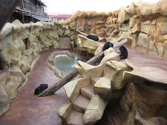 """Five bears are still suffering in deplorable conditions in a pit at DeLozier's store,"""""""