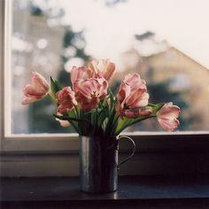 floralls:    (via Untitled | Flickr - Photo Sharing!)