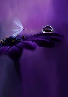 Purple Love, All Things Purple, Shades Of Purple, Rain Wallpapers, Pretty Wallpapers, Purple Flowers Wallpaper, Light Blue Flowers, Whatsapp Dp Images, Blue Orchids