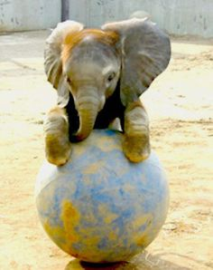 I wish I could own a baby elephant :)