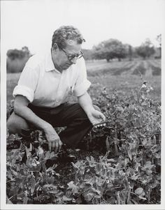One of my heroes..  J.I. Rodale, the man who founded Rodale Publishing (the publisher of this website), launched the organic farming movement in America.