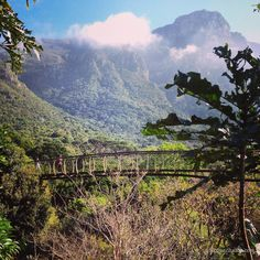 Boomslang Walkway. Top things to do in Cape Town for under R100