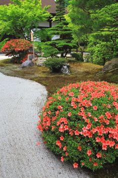 京都市東山区林下町にある知恩院(ちおんいん)の方丈庭園の皐月(さつき)や新緑など。知恩院の方丈庭園は池泉式庭園。池の周辺の立派な鮮やかなサツキ。春から初夏にかけては水辺の鮮やかなサツキと新緑の彩り、コントラストが楽しめる。方丈庭園の奥の「二十五菩薩の庭」の緑とピンクの彩り。2017年6月1日訪問、撮影。  #JapaneseGardens