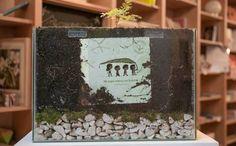 Argentina: Ecolibri da piantare che ritornano alberi