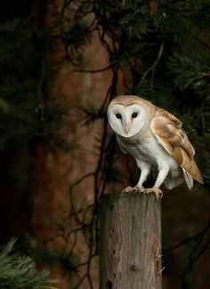 """""""A wise old owl sat on an oak; The more he saw the less he spoke; The less he spoke the more he heard; Why aren't we like that wise old bird?"""" ~Charles M. Schulz"""