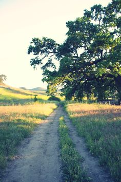 Dirt road leading to who knows where, looks like paradise.