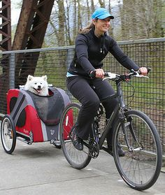 Ride like the wind while your pup enjoys the passing scenery from a comfortable seat
