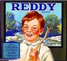 Reddy Brand, Fontana Citrus Association, Fontana, San Bernardino County, California