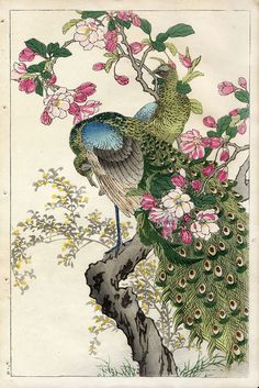 Bairei Flower and Bird Prints 1899 - peacock and apple blossom - chinoiserie print Art And Illustration, Botanical Illustration, Peacock Painting, Peacock Art, Art Japonais, Japanese Painting, Chinese Painting, Japanese Prints, Japan Art