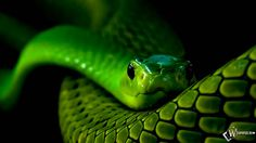 Wallpapers Neon Snake D Hd 1680x1050 | #246475 #neon snake