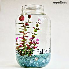 DIY a fish bowl from a one gallon pickle jar.