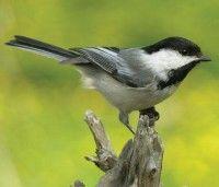Wild Bird Feeding Tips