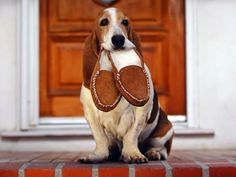 basset hound funnies pics | Basset Hound Funny Wallpapers,Basset Hound Wallpapers & Pictures Free ...