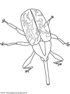 black widow spider | bugs & rodent embroidery patterns | pinterest ... - Black Widow Spider Coloring Pages