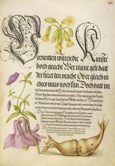 Joris Hoefnagel - Cowslip, European Columbine, and Giant Filbert, Mira calligraphiae monumenta, fols. 1-129 written 1561 - 1562; illumination added about 1591 - 1596