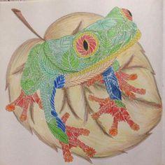 #tropical_wonderland #frog