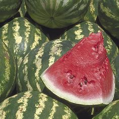 How to Grow Big Juicy Watermelons With our techniques, some finesse, and a bit of luck, you'll get your sweetest melons ever.  #organic #gardening