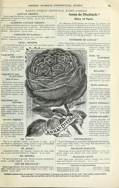 Our new guide to rose culture : 1897