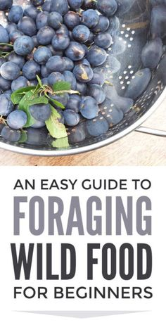 Foraging wild food guide for beginners. Easy food foraging in spring summer and autumn including blackberries damsons elderberries and sloes (plus other British wild food) with simple recipes for elderberry syrup and sloe gin Elderberry Recipes, Elderberry Syrup, Autumn Activities For Kids, Nature Activities, Outdoor Activities, Real Food Recipes, Healthy Recipes, Simple Recipes, Healthy Food