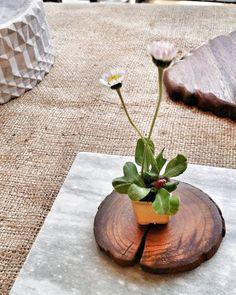 "BONSAI E KUSAMONO ""Mi piace"": 9, commenti: 1 - L'ABC del Verde (@abcdelverde) su Instagram: ""#labcdelverde #nature #beautiful #kusamono #kusamonopots #spring"""