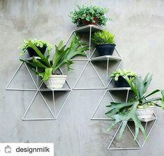Uma gracinha estes suportes para #plantas  #Repost @designmilk with @repostapp…