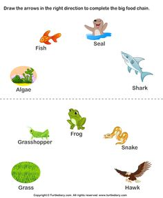 Complete the food chain - fill in arrows - TurtleDiary.com