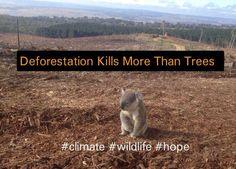 Deforestation Kills More Than Trees