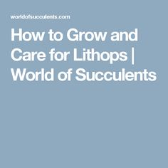 How to Grow and Care for Lithops | World of Succulents