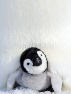 Funny penguin videos and just plain cute ones.