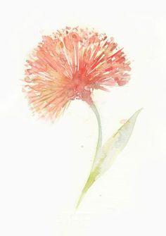 Flower, flower print, giclee, giclee flower, Watercolor art print, watercolor painting, Red Powderpuff, Original watercolor, 6x8