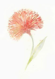 Flower, flower print, giclee, giclee flower, Watercolor art print, watercolor painting,  Red Powderpuff, Original watercolor, giclee print. $15.00, via Etsy.