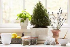 Start an Indoor Herbal Tea Garden – P&G everyday | Home & Garden | P&G Everyday