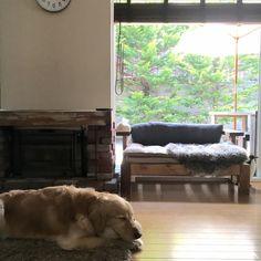 tomowithdogさんの、リビング,ソファ,DIY,ウッドブラインド,ゴールデンレトリバー,パラソル,暖炉風普通のストーブ,四角いソファー,こーる君,のお…