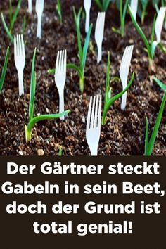 20 Insanely Clever Gardening Tips And Ideas. Not everyone has green fingers. Use these clever gardening tips and ideas to help you garden this spring. PIN & READ LATER Take away the green and there sits my garden. Gardening Supplies, Gardening Tips, Garden Projects, Garden Tools, Garden Crafts, Garden Hose, Plastic Forks, Garden Beds, Vegetable Garden
