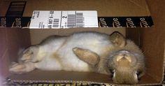 Bunny in a box.