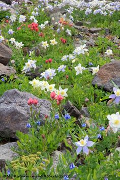 Wildflowers - Must visit Ouray, Colarado. Such a beautiful sight. and at the end of the trip will look forward to some good chocolate!