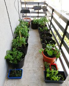 Garden Seeds, Balcony Garden, Make It Yourself, Plants, Slip On, Hipster Stuff, Plant, Balcony Gardening, Planets