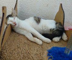 Num consegui aguentar, tive que dormir. Boa noite galera! #miaudote #goodnight --------------------------------------------------- www.catland.org.br www.catlandlojinha.com.br  catlandrescue@gmail.com --------------------------------------------------- #catland #gocatland #catlandrescue #instacats #catlovers #catsofinstagram #catoftheday #ilovecats #adote #adotenãocompre