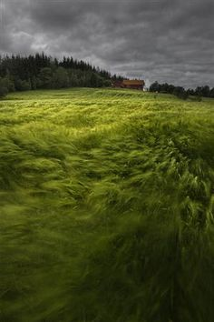 This picture describes glamour of a windy day in Norway. The wind flows over a wheat field. Another awesome picture which showing the beauty of nature. Beautiful World, Beautiful Places, Beautiful Pictures, Beautiful Norway, Beautiful Scenery, Photocollage, Windy Day, All Nature, Jolie Photo