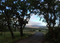 Paicines Oak Trees and Hills  San Benito County, CA