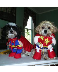 Super Dog (Rocky, on the left) and Wonder Puppy (Adrian) are suited up and ready to save the world!
